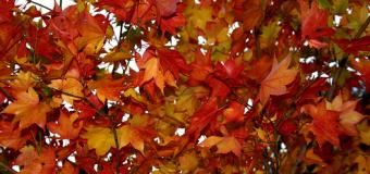 Nu ardeți frunzele! Apelul Ministerului Mediului