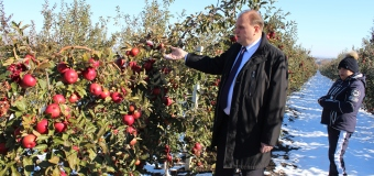 Mii de de tone de mere au înghețat în nordul țării. Află ce se va întâmpla cu acestea!