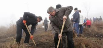 Angajații Parlamentului au plantat stejari (galerie foto)
