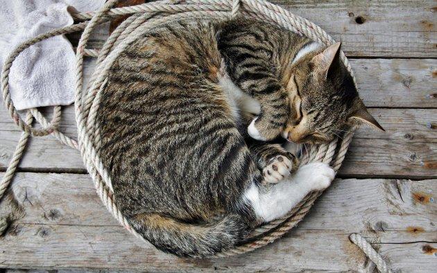 FOTO ȘOCANT! O afacere înfloritoare: traficul cu blănuri de pisici
