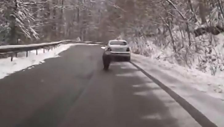 VIDEO// Apariţie ŞOC pe o şosea din România. Creatura care i-a ULUIT pe şoferi