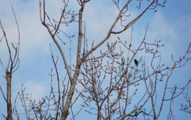 Vine primăvara… în decembrie! Vezi prognoza meteo