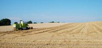 Producţia globală agricolă a crescut. Vezi cu cât!