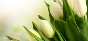 Ministrului Finanţelor: Va felicit şi vă doresc un 8 Martie cît mai frumos!