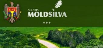 """(INTERVIU) """"Moldsilva"""" își dorește să avanseze în toate domeniile și în toate activitățile legate de fondul forestier"""