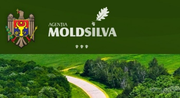 """Agenția """"Moldsilva"""", despre decizia de sistare a lucrărilor silvotehnice!"""