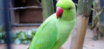Incident bizar în India: un papagal a fost arestat de Poliţie. Motivul este incredibil