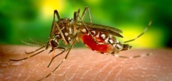 Tot ce trebuie să ştiţi despre virusul Zika: Organizaţia Mondială a Sănătăţii spune totul