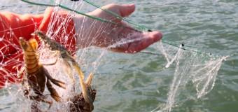 Cazuri de braconaj piscicol, depistate pe râul Nistru