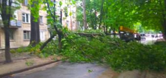 Procuratura cercetează sub aspect penal cazul femeii strivite mortal de un copac pe strada Vasile Lupu