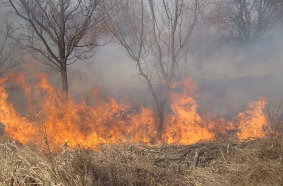Pe parcursul anului 2016, incendiile au afectat 173 ha de vegetație