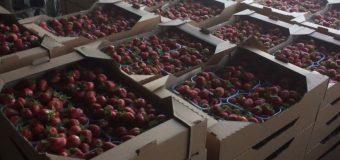 Trei tentative de plasare pe piață a mai multor loturi de produse alimentare, inclusiv prohibite – stopate