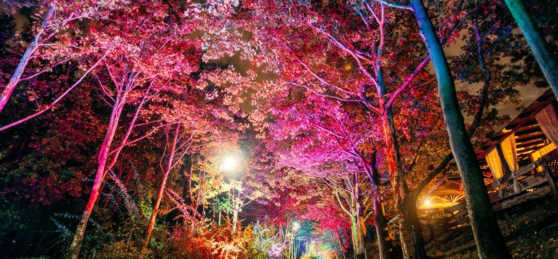 Astăzi în parcul Valea Trandafirilor va fi instalat un pian multicolor. Mai multe detalii