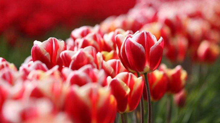 """Comercianții de flori – sancționați de Fisc, în urma monitorizării în perioada """"Ultimului sunet"""""""