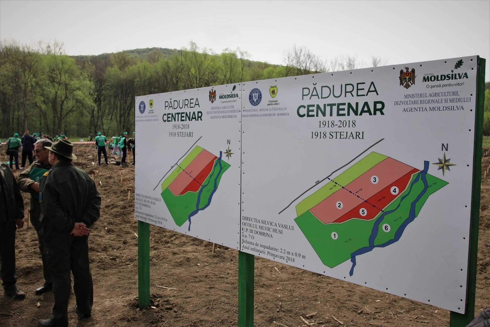 Pădurea Centenar – plantată de silvicultorii din România și Republica Moldova (foto)
