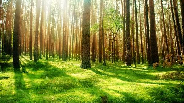 Pădurea Centenar, demers al silvicultorilor din România și Republica Moldova