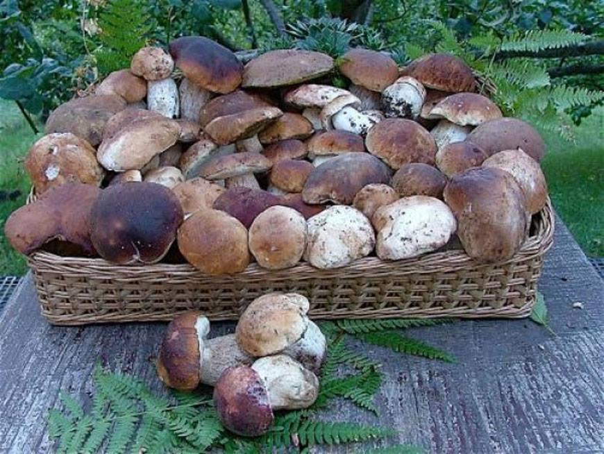Ministerul Sănătății, Muncii și Protecției Sociale atenționează populația privind consumul de ciuperci