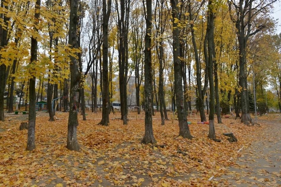 Primăria Chișinău anunță programul de evacuare a frunzișului pe sectoare