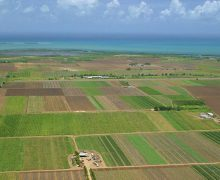 Noul Cod Funciar: Terenurile agricole vor putea fi cumpărate doar de cetățenii Republicii Moldova