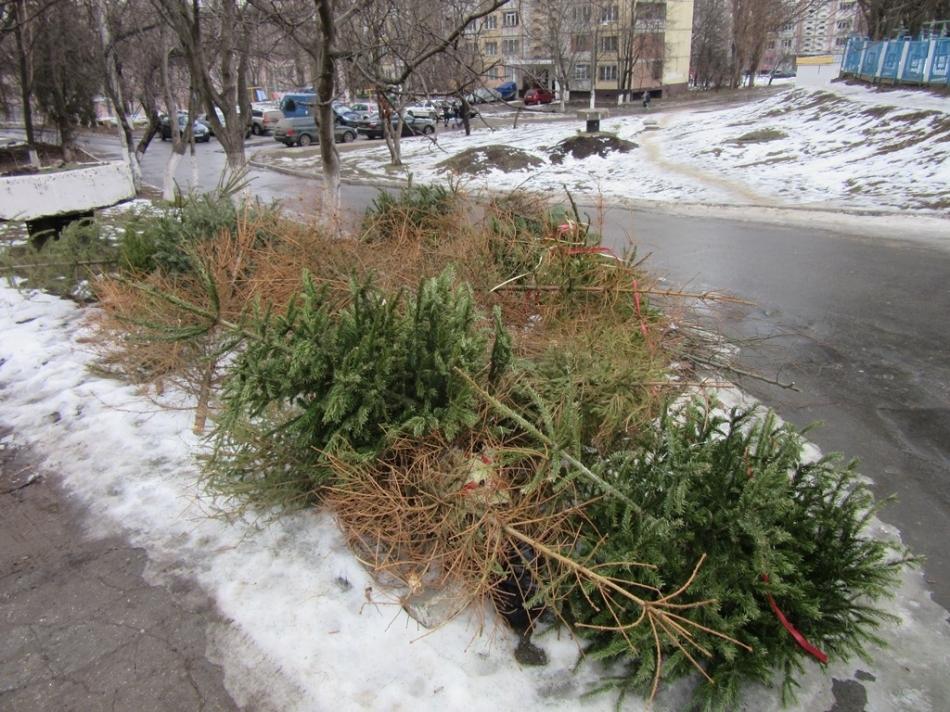 Primăria Chișinău anunță despre colectarea brazilor după sărbătorile de iarnă