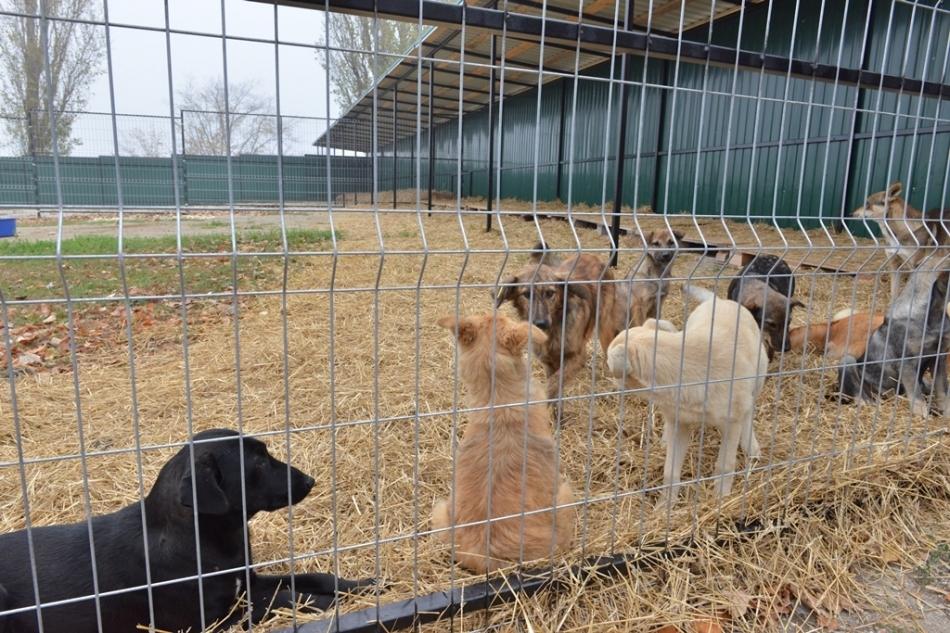 Primăria Chișinău: A doua misiune de sterilizare a câinilor în municipiu