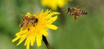 """""""Înțepăturile de insecte cauzează reacții alergice severe"""". Centru Național de Asistență Medicală oferă detalii!"""
