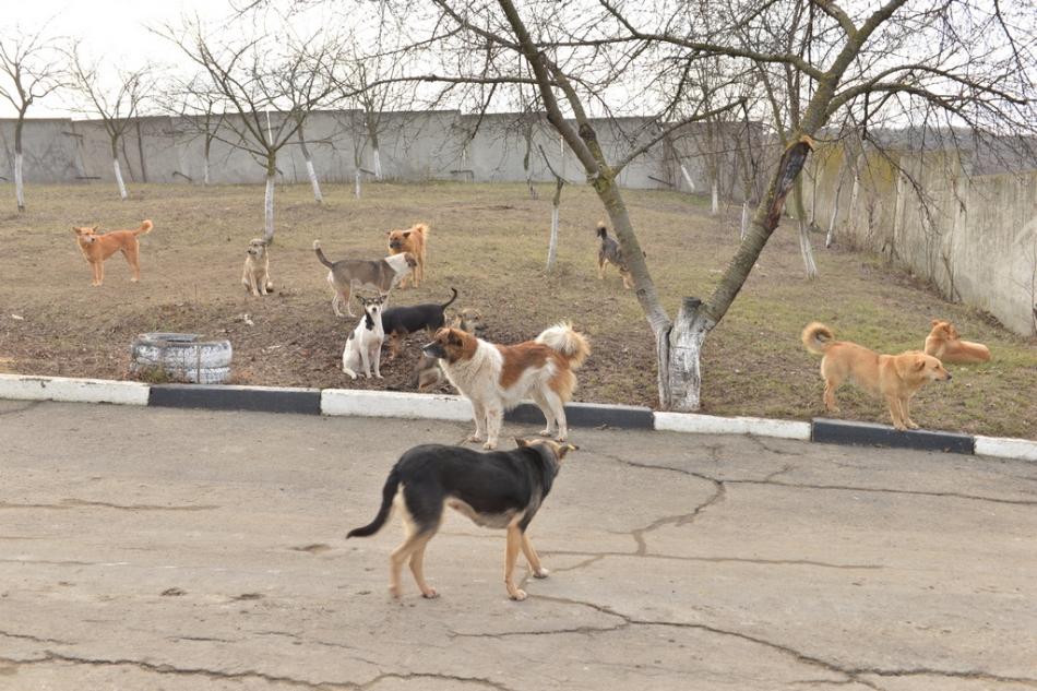Centrul de găzduire a animalelor fără stăpân din capitală se extinde