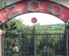 De astăzi, ușile Grădinii Zoologice din capitală se redeschid