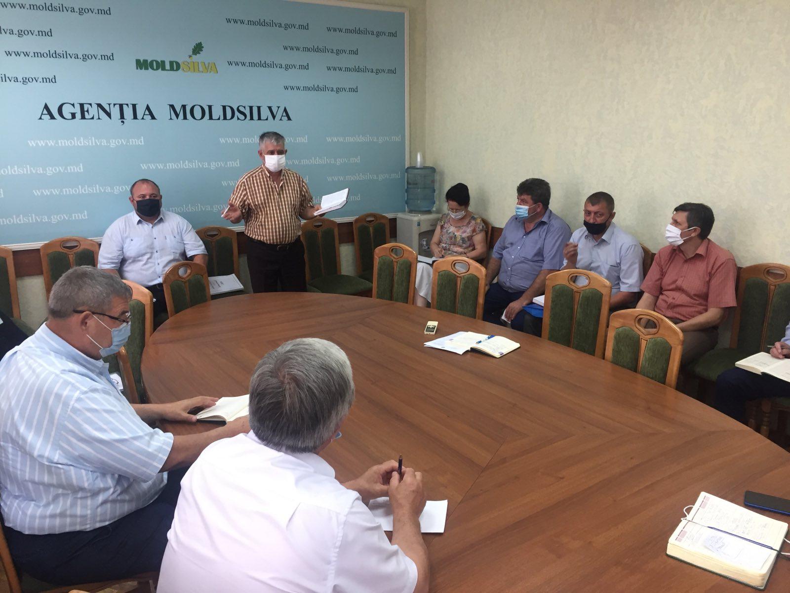 Moldsilva: Managementul superior al Agenției optează clar pentru diversificarea surselor necesare dezvoltării ramurii silvice