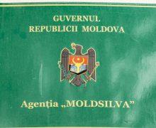 """(VIDEO) Agenţia """"Moldsilva"""" oferă detalii despre campania de plantare de arbori"""
