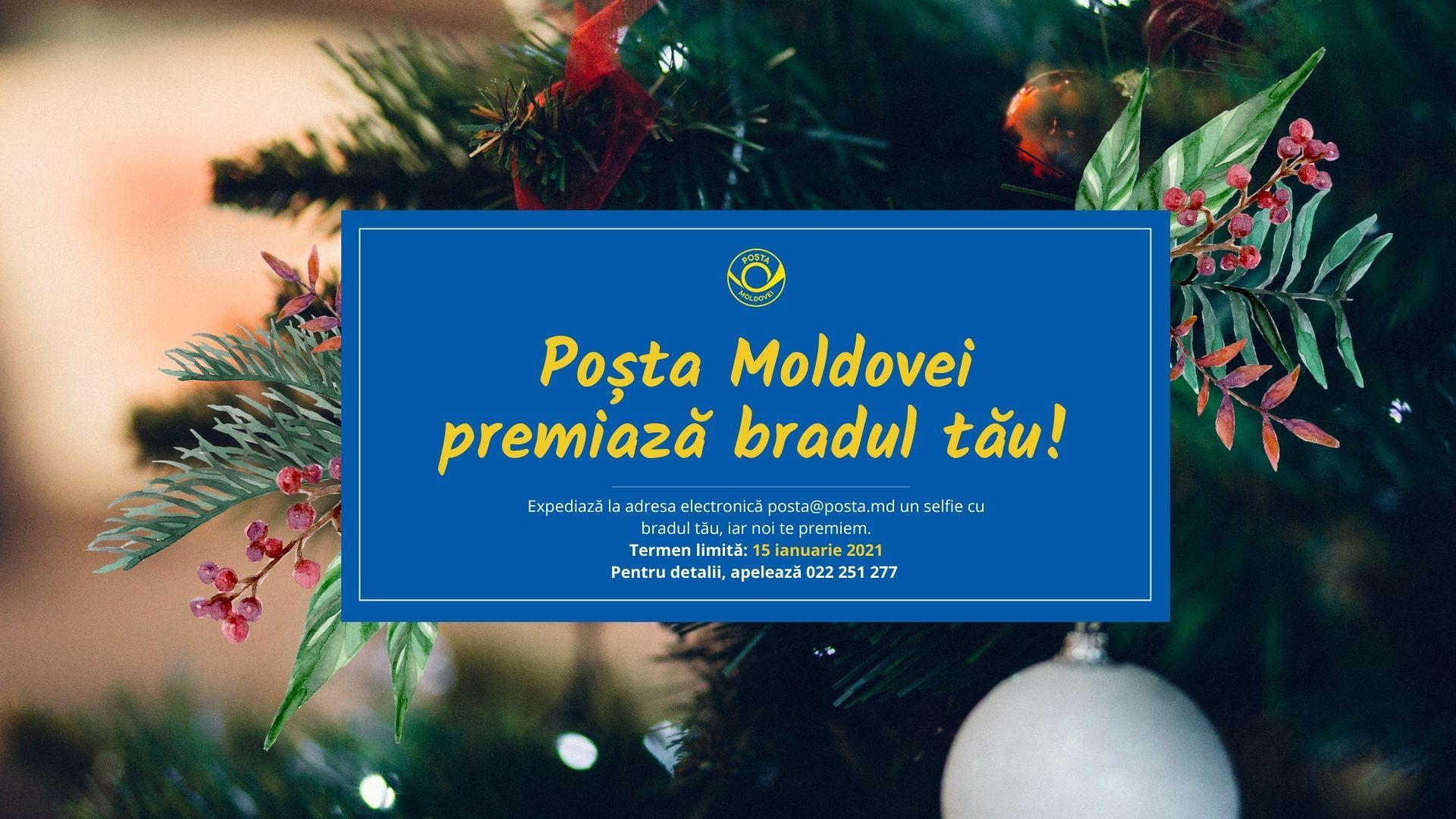 Poșta Moldovei: Suntem în căutarea celui mai frumos brad de Crăciun!