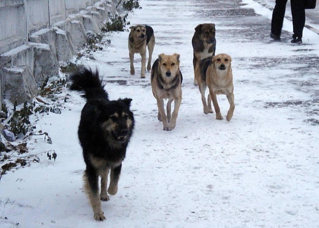 Ceban a solicitat responsabililor ca până miercuri să vină cu soluţii pentru soluţionarea problemei ce ţine de câinii maidanezi